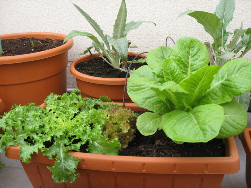 Huerto urbano en macetas for Como cultivar hortalizas