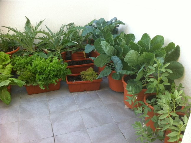 As crece nuestro peque o huerto urbano ecol gico - Pequeno huerto en casa ...